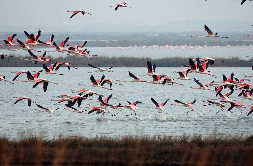 visitare Ravenna fenicotteri rosa del delta