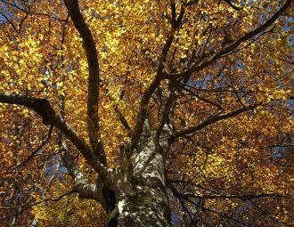 Foliage in Mugello