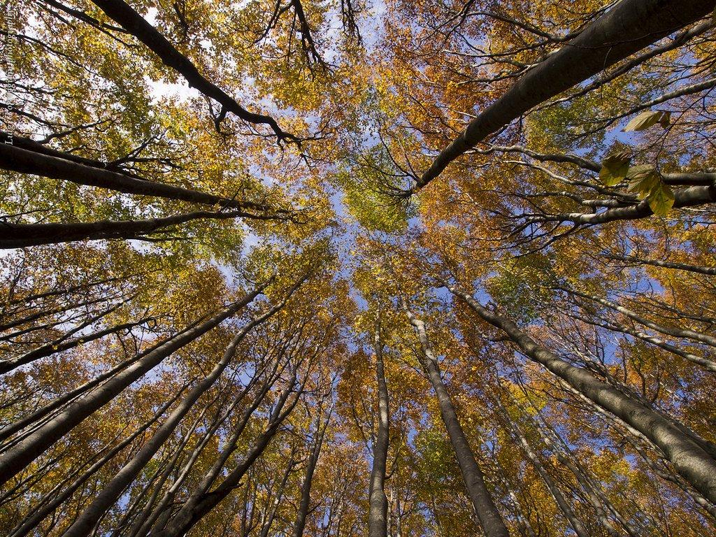 foresta casentinese vista dal basso