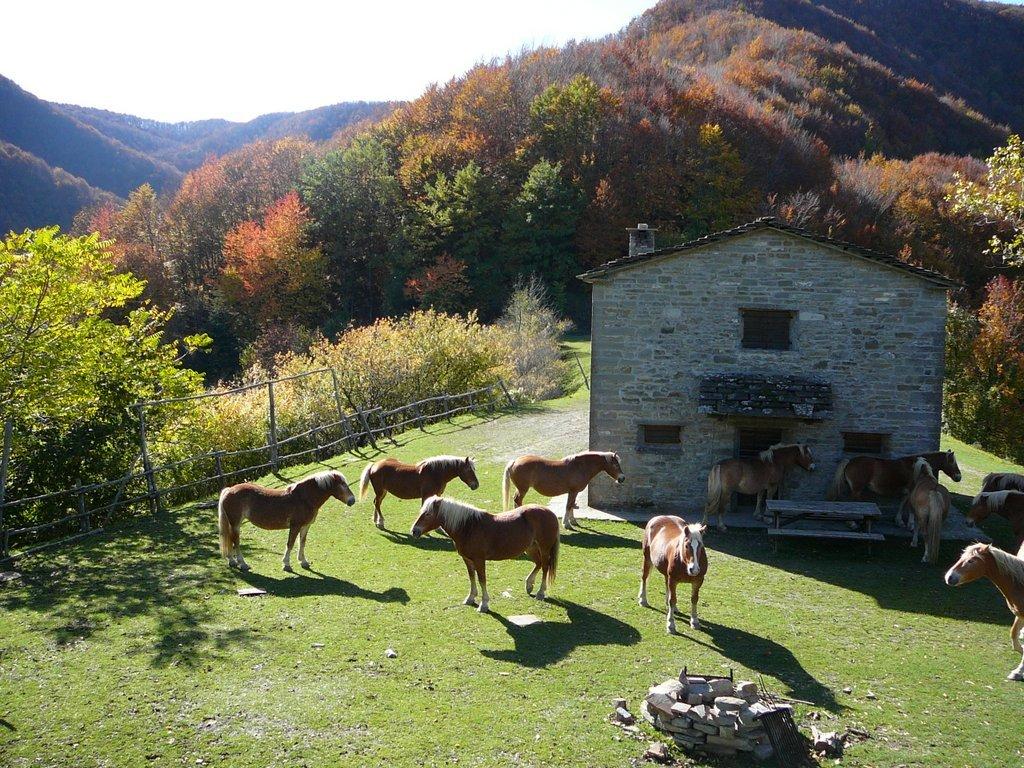 Cosa vedere in Romagna Badia di Moscheta