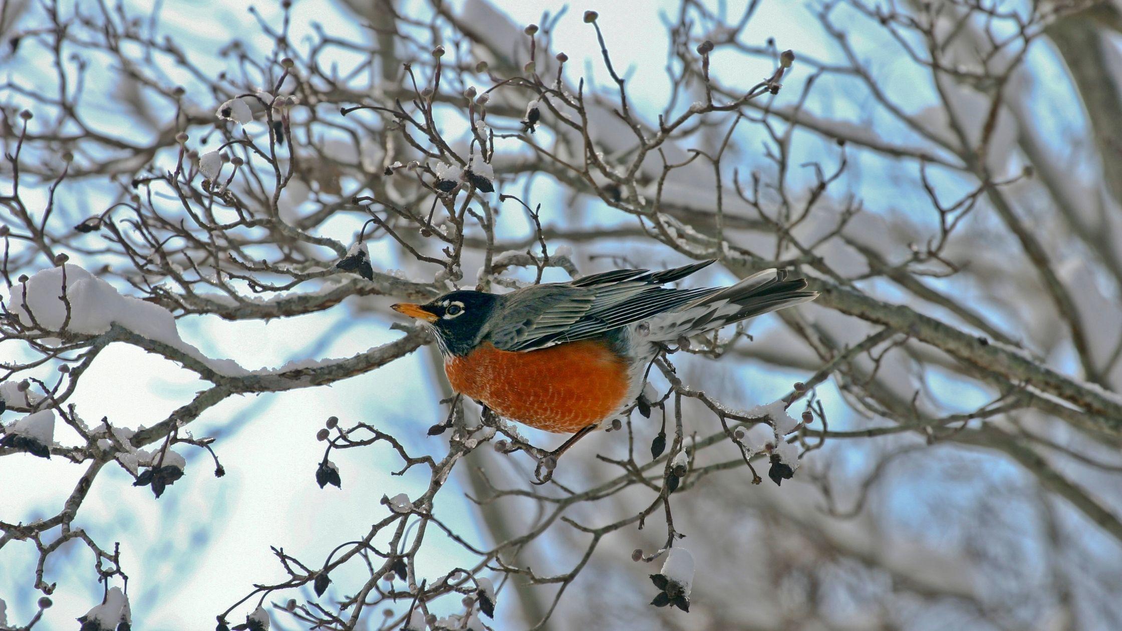 Come proteggere gli animali dal freddo invernale. 7 preziosi consigli dall'ENPA