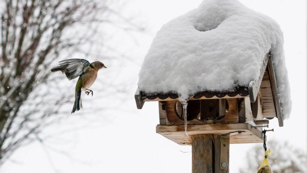 Un uccellino vola verso una casetta che contiene semi oleosi per nutrire gli uccellini. Imparare come proteggere gli animali dal freddo è molto importante