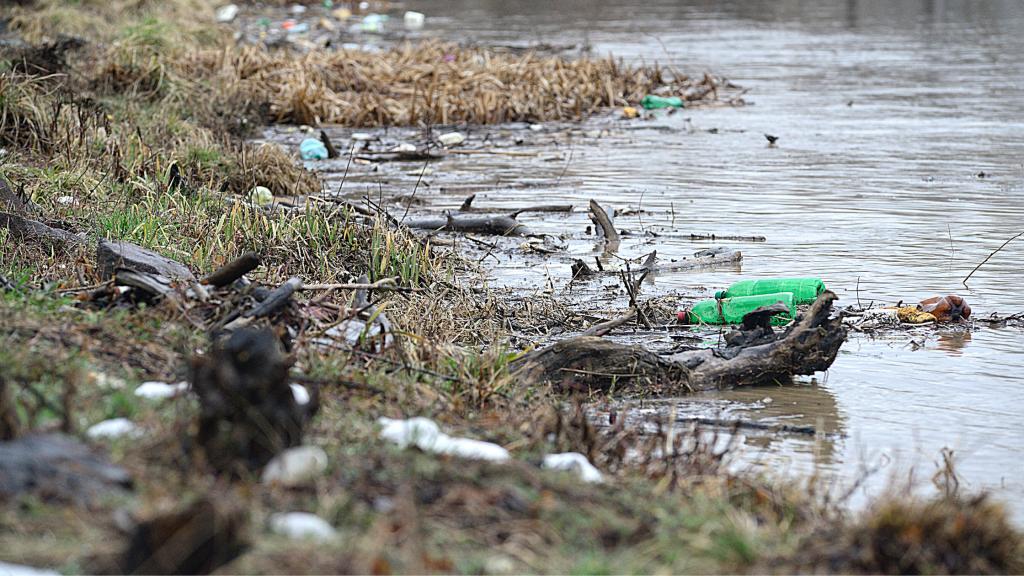 plastiche nei fiumi, intrappolate dalla vegetazione della riva