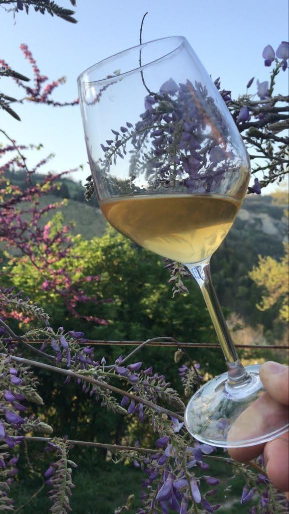 uve trebbiano fermentato sulle bucce ecco il vino vivo dal tipico colore arancione, l'aperitivo a Brisighella