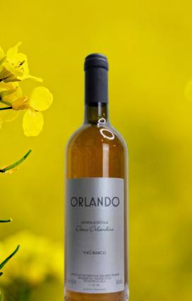 Orlando di Orlandini è un vino vivo, trebbiano al 100%