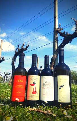 etichette di vini naturali in vendita presso la vineria Coramella di Brisighella