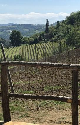 un vigneto della vena del gesso da cui si ottiene vino vivo vino naturale