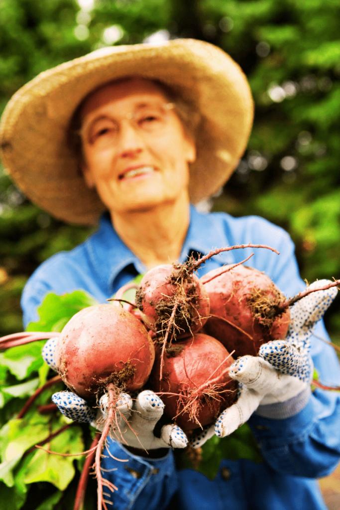 Anziana contadina con rapa rossa in mano: le proprietà rapa rossa sono tantissime