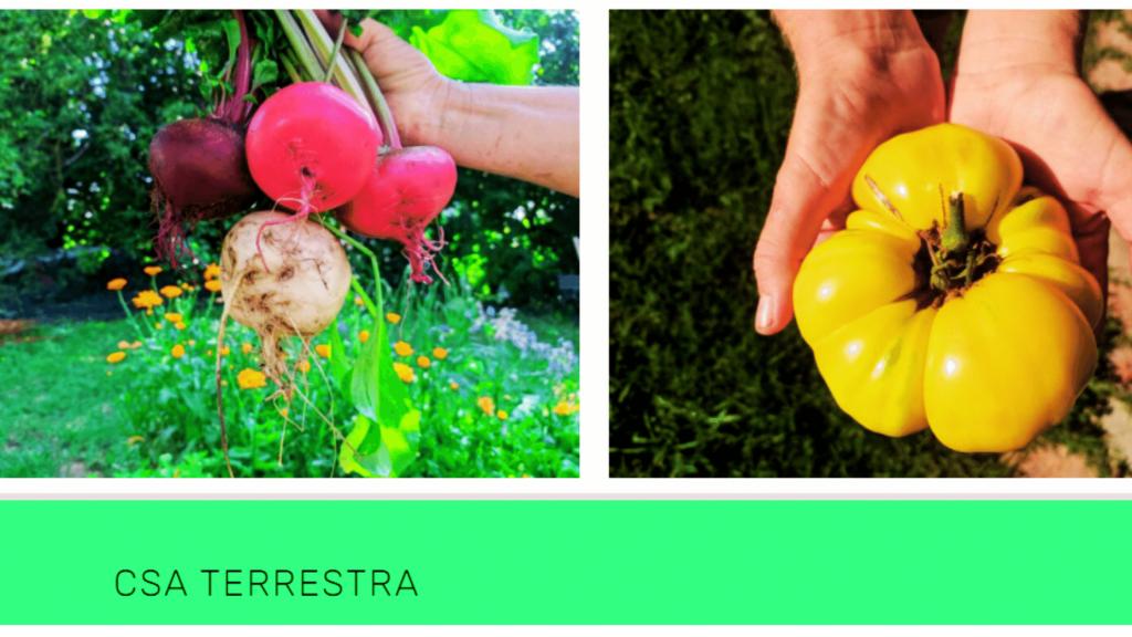foto dalla pagina della CSA terrestra che evidenzziano alcuni prodotti dei contadini: rape rosse e un peperone